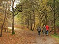 Horse Ride through Epping Forest - geograph.org.uk - 2173607.jpg