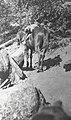 Horse along the Atnarko trail (55816).jpg