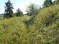 Hulyaihorodok, Cherkas'ka oblast, Ukraine, 20740 - panoramio (14).jpg