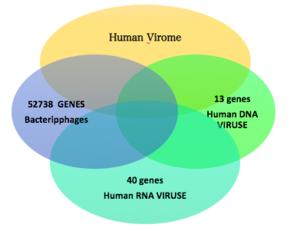 Human virome - Image: Human Viruses