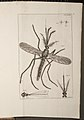 Illustration of a Mosquito from Historia Insectorum Generalis.jpg