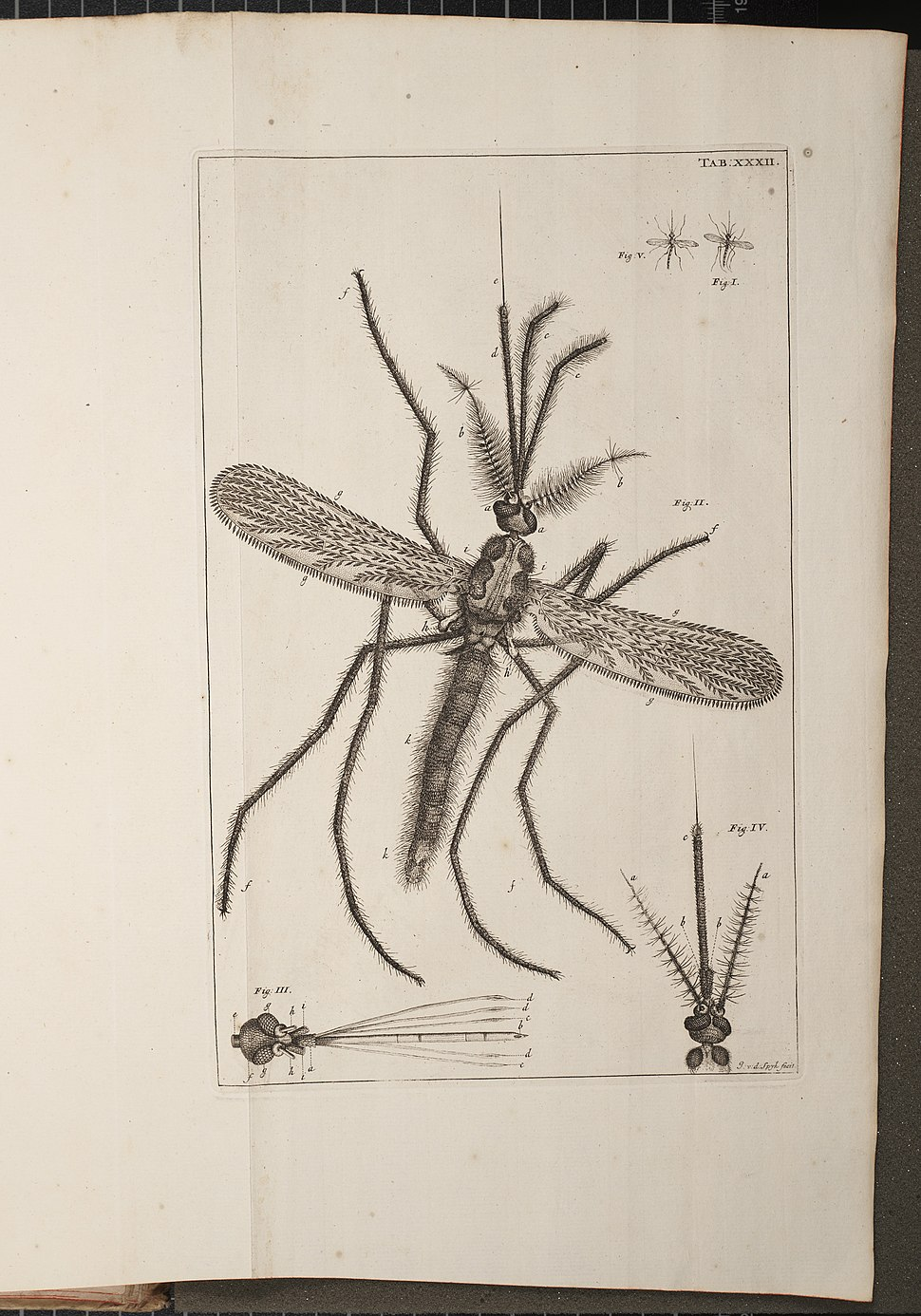 Illustration of a Mosquito from Historia Insectorum Generalis