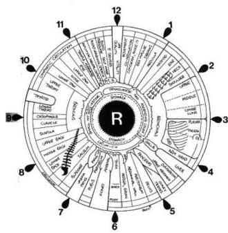 Iridology - This is the corresponding chart for the right iris, which relates to the right side of the body.