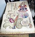 Istituto di anatomia umana normale, museo, illustrazioni antiche 01.JPG