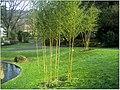 January Frost Botanic Garden Freiburg - Master Botany Photography 2014 - panoramio (9).jpg