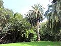 Jardín canario 95.JPG