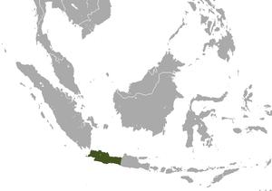 Javan slow loris - Image: Javan Slow Loris area