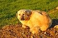 Kûçik-3.jpg