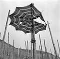 Kapotte paraplu aan een stok bij wijnranken, Bestanddeelnr 254-4436.jpg