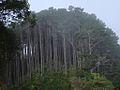 Karori Trees - Flickr - Teacher Traveler.jpg