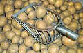 Kartoffelschaufel.JPG