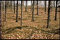 Kasen Kurveröd - KMB - 16001000030244.jpg