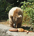 Kiev Zoo - bear.jpg