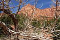 Kolob Canyons, Walk to the Kolob Arch (Zion National Park) (3439472131).jpg