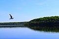 Kondopozhsky District, Republic of Karelia, Russia - panoramio (8).jpg