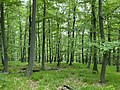 Kosmaj forest 4.jpg