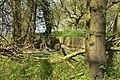 Kreis Pinneberg, Naturschutzgebiet 34 WDPA ID 30102 Haseldorfer Binnenelbe mit Elbvorland 11.jpg