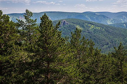 View of pines in the Kuysumy mountains in Siberia