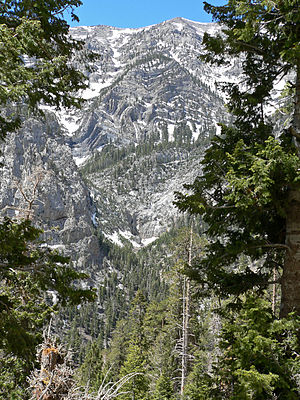 Clark County, Nevada - Kyle Canyon in the Mount Charleston Wilderness