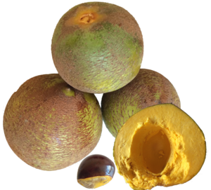Pouteria lucuma - Lucumas from Chile.