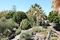La Palma - Los Llanos - Carretera a Puerto Naos - Parque Antonio Gómez Felipe (Morera) 49 ies.jpg