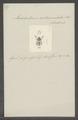 Labidostomis - Print - Iconographia Zoologica - Special Collections University of Amsterdam - UBAINV0274 035 05 0002.tif