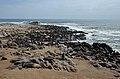 Lachtani na Cape Cross - Namibie - panoramio (4).jpg