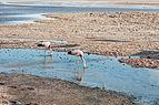 Laguna Chaxa, Desierto de Atacama, Chile, 2016-02-06, DD 34.JPG