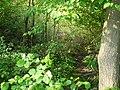 Langenfeld Nähe Haus Graven 0001.jpg