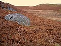 Large boulder near Silver Hollow - geograph.org.uk - 663287.jpg