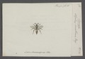 Larrada - Print - Iconographia Zoologica - Special Collections University of Amsterdam - UBAINV0274 043 08 0002.tif