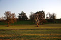 Late afternoon in Ickworth Park - geograph.org.uk - 1608692.jpg