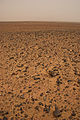 Latest photo from Mars Exploration Rover (2357478409).jpg