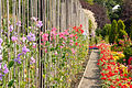 "Le ""Victorian Walled Garden (parc Bellahouston, Glasgow) (3811539012).jpg"