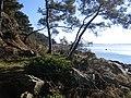 Le sentier de la pointe du blaire a baden - panoramio.jpg