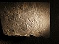 Leanchoilia fossil.jpg