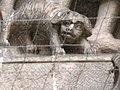 Legnica, Katedra Świętych Apostołów Piotra i Pawła w Legnicy kościół par. p.w. śś. Piotra i Pawła, ob. katedra 7.JPG