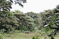 Lesser Kudu, Nairobi National Park.jpg