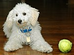 Let's play ball! (451436130).jpg