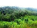 Liberian Forest - panoramio.jpg