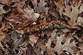 Lichen stick.jpg