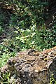 Little Yoho Valley IMG 4875.JPG
