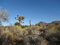 Living desert.JPG