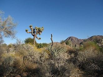 Living Desert Zoo and Gardens - The gardens