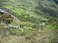 Looking down on Isabeloca^ - panoramio.jpg