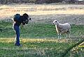 Lugarzen - Conquista hasta a las ovejas (by-sa).jpg
