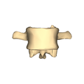 Lumber vertebra 3 close-up anterior surface.png