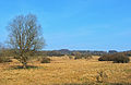 Lummersbach Panorama1.jpg