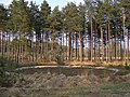 Lunge ring in Ipley Inclosure, New Forest - geograph.org.uk - 398145.jpg