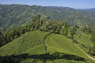 Ilam District - Lush Green Tea Gardens are what makes Ilam district popular.